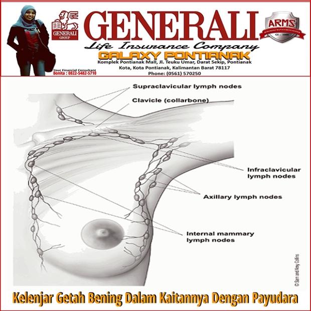 Kelenjar Getah Bening Dalam Kaitannya Dengan Payudara | Generali Galaxy Pontianak